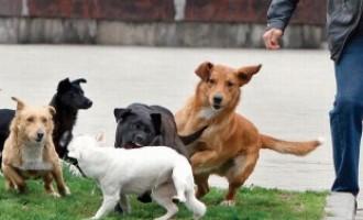 """Uloga pasa u """"našoj (r)evoluciji"""": Zašto je čovjek ugrizao psa?!"""